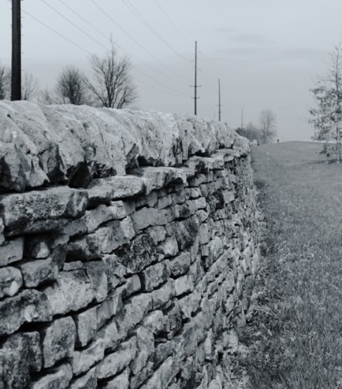Stone Fence Row running along the Paris Pike, Bourbon County, Kentucky. Color picture, but looks almost black and white. Photo by Michael Stevens, 4/2/2014.