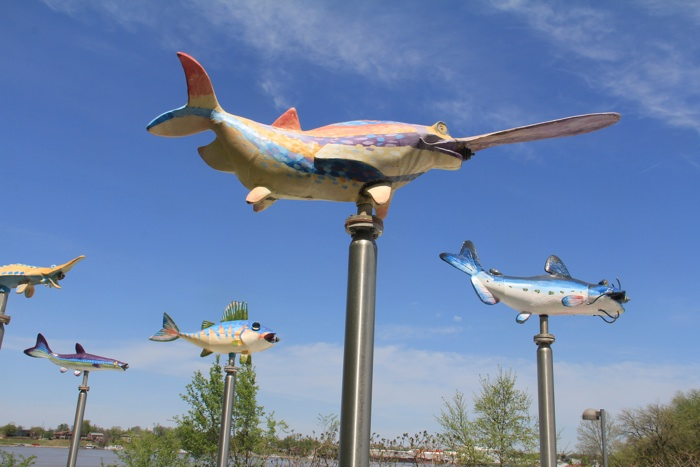 """There is """"fly fishing"""" and """"fish flying"""".  For the latter (or ladder), then here is a picture from the Louisville Waterfront.  My idea of """"shark week"""" is a little tamer that that of the discovery channel.   Photo by Michael Stevens, 4/2013."""